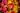 Naturaufnahme von eng beieinander liegenden dunkelrote und gelbe Herbstblaettern