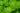 Naturaufnahme einer leuchtend gruenen Minzepflanze mit Wassertropfen in Nahaufnahme