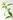 Stengel einer gruenen Verveine Pflanze mit frischen Blaettern vor weißem Hintergrund