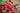 Mehrere rote Himbeeren liegen zusammen mit einigen frischen gruenen Blaettern in einem braunen geflochtenen Korb auf dunklem Holztisch