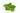Nahaufnahme einiger gruener Zitronenmelisse Blaetter auf weißem Untergrund