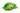 Gruene Kaffeebohnen liegen auf einem gruenen Blatt mit weißem Hintergrund
