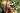 blonde junge frau im roten pullover steht vor hohen gruenen baeumen und schaut laechelnd nach oben