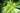 Von unten fotografierter Bambuswald mit dichten Bambushoelzern und leuchtend gruenen Baumkronen