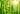Zarte gruen leuchtende Bambusstiele mit durchscheinendem Sonnenlicht