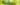 Nahaufnahme von einigen Gruenen Tee Blaettern und Gruenen Kaffeebohnen auf gruenem Hintergrund mit Lichtreflexion