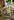 Runde Porzellan Auflaufform mit Rharbaber Crumble auf Holztisch