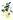 Olivenzweig mit reifen gruenen Oliven und gruenen Blaettern und hellgruenen Olivenoel Tropfen auf weißem Untergrund